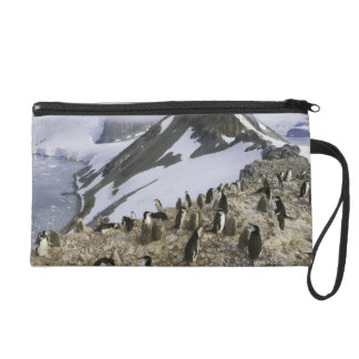Colony of Chinstrap penguins Wristlet