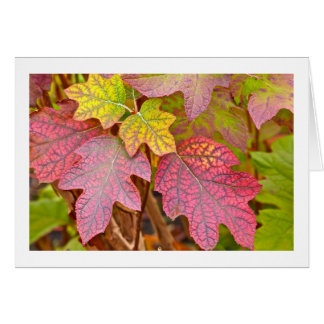 """""""COLOR AND TEXTURE/LAYERS OF AUTUMN LEAVES/NOTECAR NOTE CARD"""