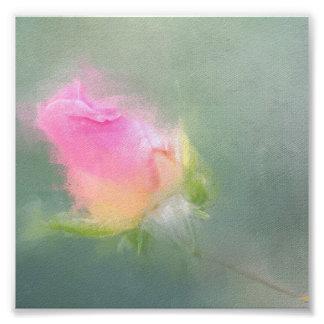 Color beautiful roses poster photo print