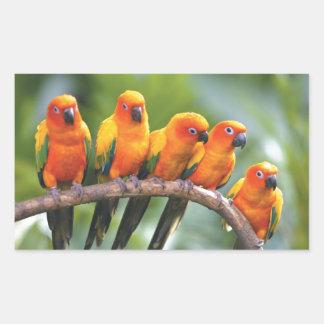 Color birds rectangular sticker