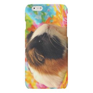 Color Burst Guinea Pig Cell Phone Case iPhone 6 Plus Case