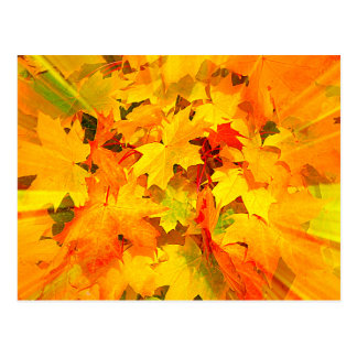 Color Burst of Fall Leaves Autumn Colors Postcard