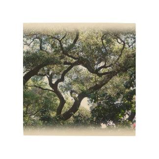 Color Image of California Oaks on Wood Wood Wall Decor