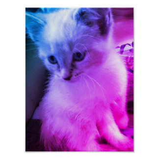 Color Kitten Poster