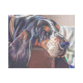 color pencil drawing of basset hound dog on canvas gallery wrapped canvas