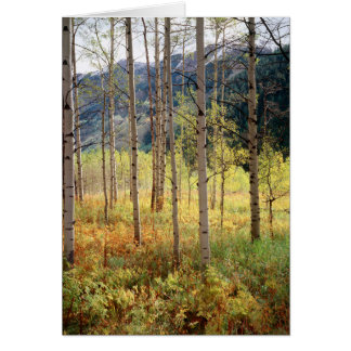 Colorado, Autumn colors of aspen trees Card