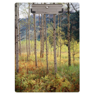 Colorado, Autumn colors of aspen trees Clipboard