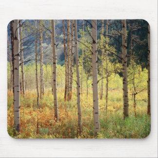 Colorado, Autumn colors of aspen trees Mouse Mat