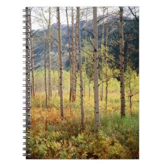 Colorado, Autumn colors of aspen trees Notebooks