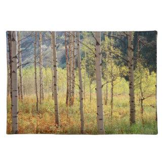 Colorado, Autumn colors of aspen trees Place Mats