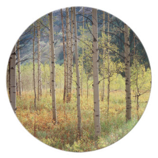 Colorado, Autumn colors of aspen trees Plate