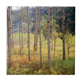 Colorado, Autumn colors of aspen trees Small Square Tile