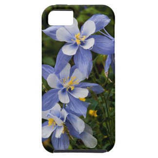 Colorado Blue Columbine near Telluride Colorado iPhone 5 Cases