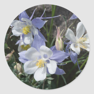 Colorado columbine classic round sticker