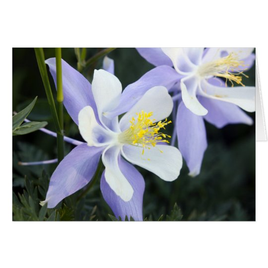 Colorado Columbines Card