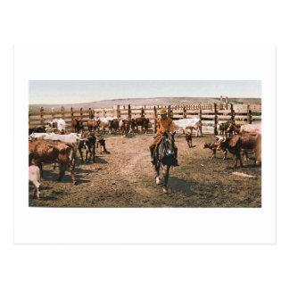 Colorado Cowboy 1904 Postcard