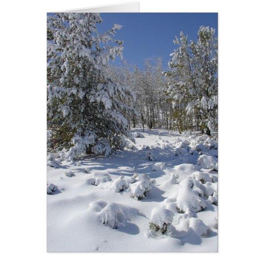 Colorado Forest Beauty Christmas Card