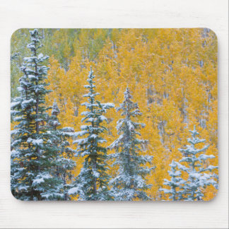 Colorado, Grand Mesa. Early snowfall on forest Mouse Pad