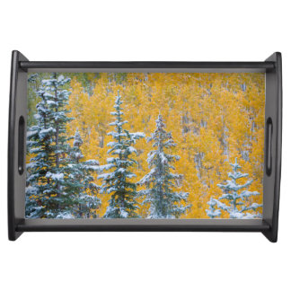 Colorado, Grand Mesa. Early snowfall on forest Serving Tray