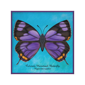 Colorado Hairstreak Butterfly Canvas Print