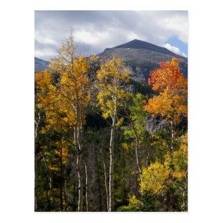Colorado Inspirational Postcard