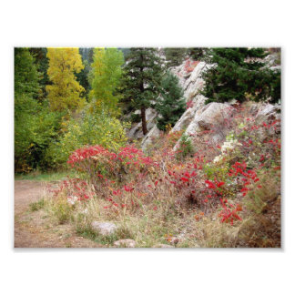 Colorado Landscape Works Photo