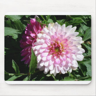 Colorado pink dahlia mouse mat