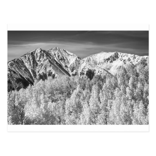 Colorado Rocky Mountain Autumn Magic BW Post Card
