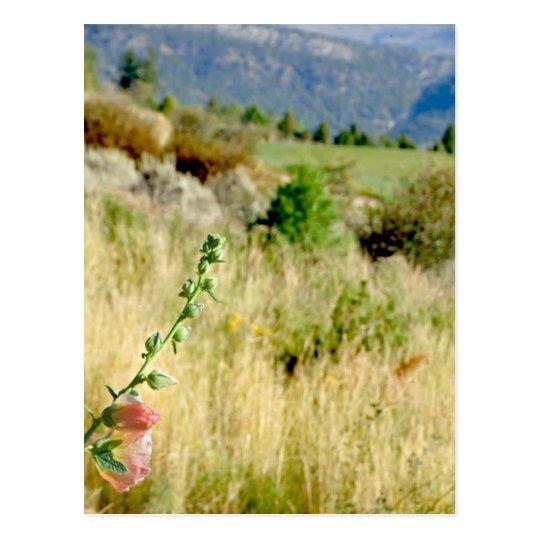 Colorado September Postcard