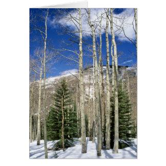 Colorado Wilderness Card