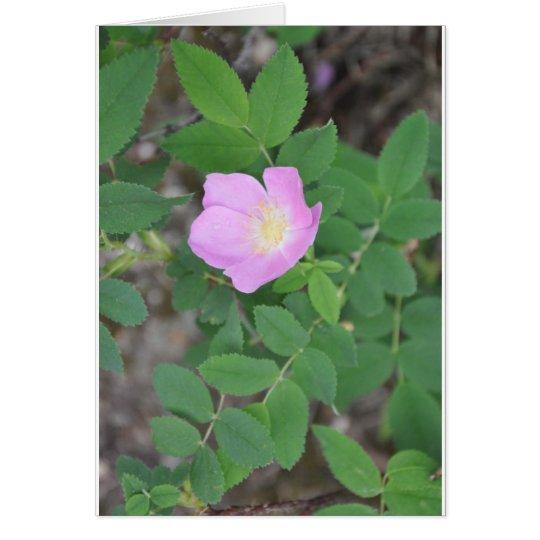 Colorado wildflower card