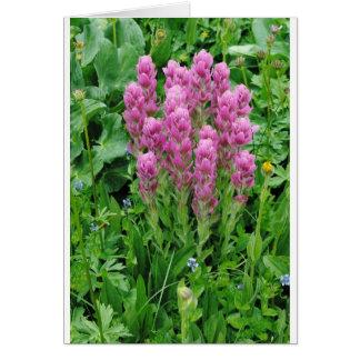 Colorado wildflower photo card