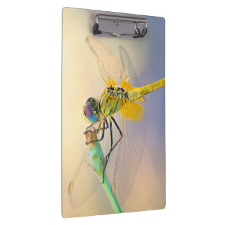 Colored Dragonfly Clipboard