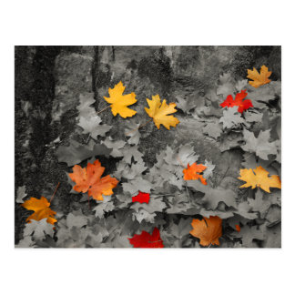 Colored Leaves in a Black and White World Postcard