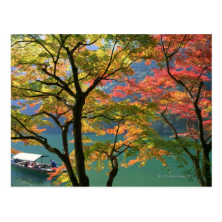 Colored Leaves Postcard