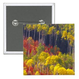Colorful aspens in Logan Canyon Utah in the 15 Cm Square Badge