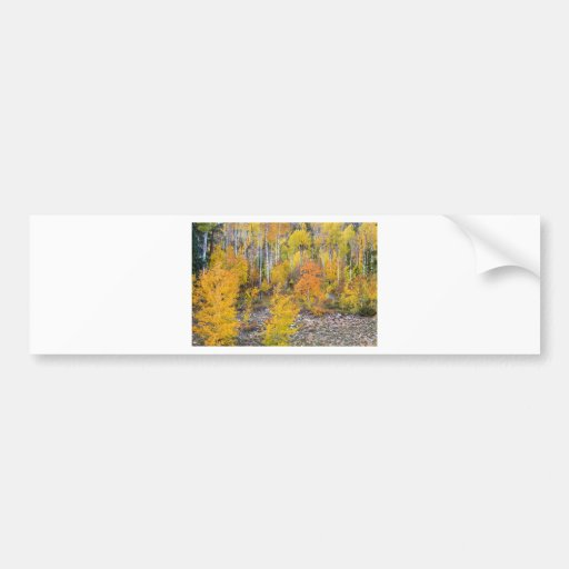 Colorful Autumn Forest In The Canyon of Cottonwood Bumper Sticker