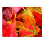 Colorful Autumn Leaves Close-up Postcard