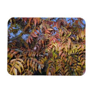 Colorful Autumn Leaves Pinnate Rectangular Magnet