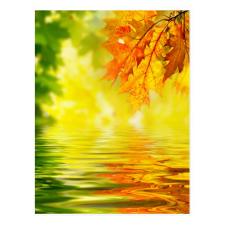Colorful autumn leaves reflecting in the water postcard
