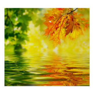 Colorful autumn leaves reflecting in the water poster