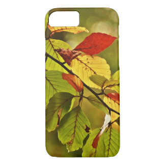Colorful autumn tree leaves iPhone 7 case
