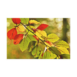 Colorful autumn tree leaves stretched canvas print