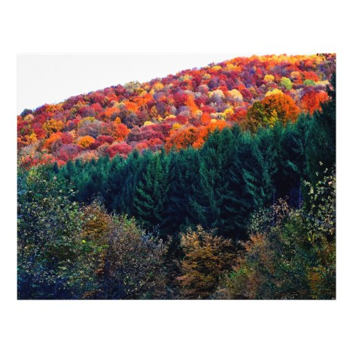 Colorful autumn trees flyers