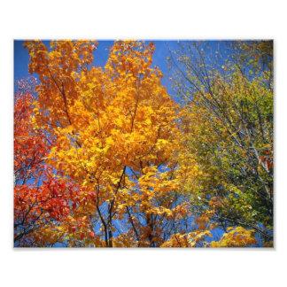 Colorful Autumn Treetops Nature Landscape Photo