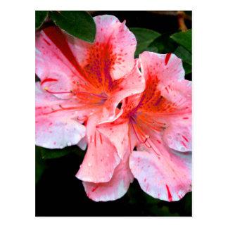 Colorful Azalea Flower Postcard