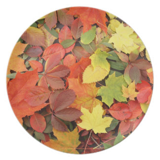 Colorful Background Of Fallen Autumn Leaves Party Plates