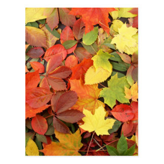 Colorful Background Of Fallen Autumn Leaves Postcard