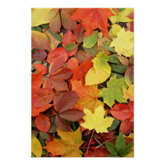 Colorful Background Of Fallen Autumn Leaves Poster