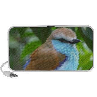 Colorful bird iPhone speaker